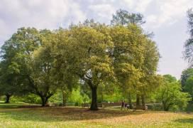 Kew-Gardens-IMGP1272