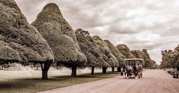 Hampton Court DSC02115