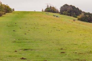Boxhill dsc02894