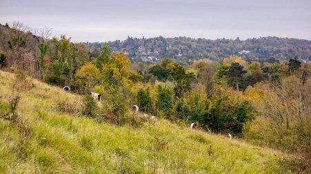 Boxhill dsc02905
