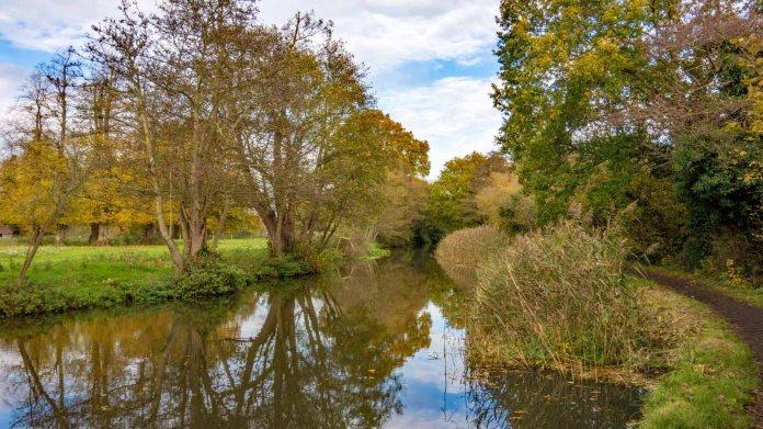 River Wey 08