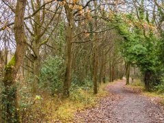 Ashtead Common walk 2