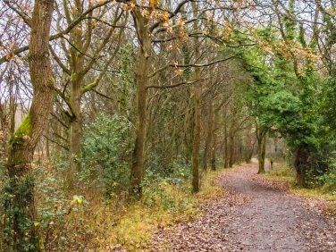 Ashtead Common walk 2