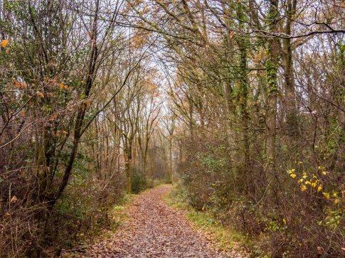 Ashtead Common walk 3