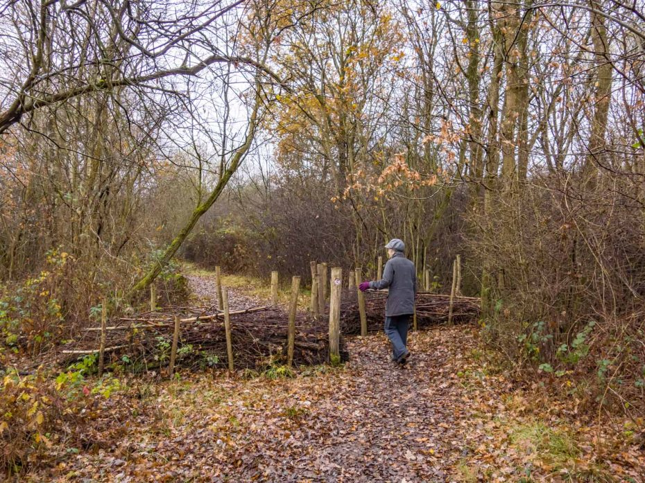 Ashtead Common walk 4