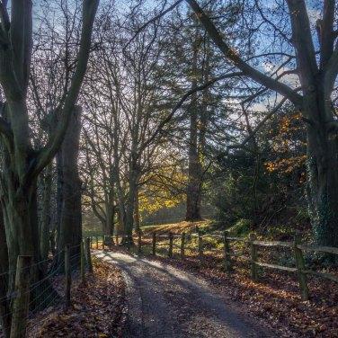 Westhumble walk_0017