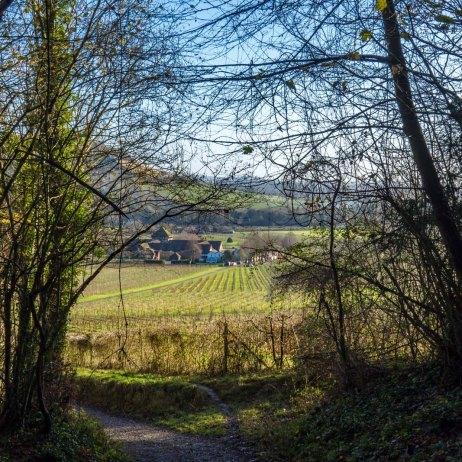Westhumble walk_0019